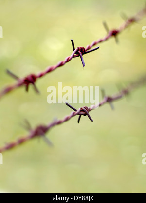 Old rusty barbed wire on a green background - Stock Photo