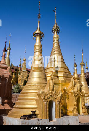 Indeinn Inle Myanmar Burma Asia golden architecture colourful dog exotic many natural remote stupas touristic travel - Stock Photo
