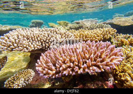 Shallow coral reef, Maldives, Indian Ocean - Stock Photo