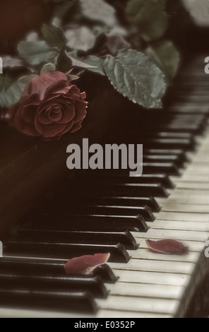 Live red rose lying on the keys of an old piano - Stock Photo