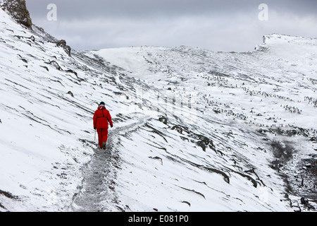 two tourists walking along ridge at hannah point penguin colony Antarctica - Stock Photo