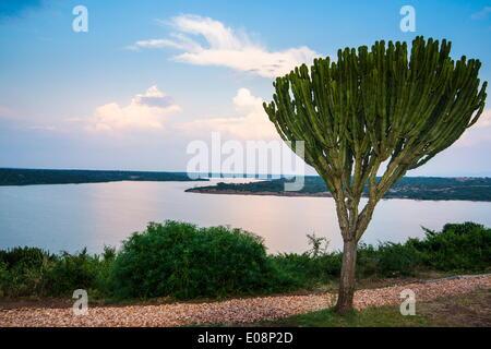 Cactus tree above the Kazinga Channel  linking Lake George and Lake Edward at sunset, Queen Elizabeth National Park, - Stock Photo