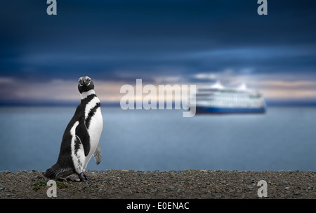 Penguin and Cruise in Patagonia. Awe Inspiring Travel Image. High definition image. - Stock Photo
