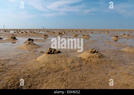 Sandy Tidal Flat With Blow Lug Faeces, Arenicola Marina - Stock Photo