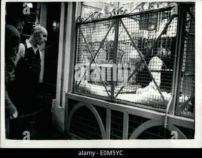 Oct. 10, 1953 - Bus Driver Baulks Smash-and-Grab Bandits. Clearing the Wrecked Window: Smash and Grab bandits ,made - Stock Photo