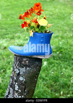 Funny flower decoration set in old rubber boot - Stock Photo