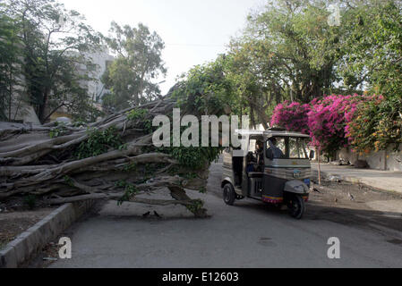 Vehicle passes near fallen tree that lay down at road create hurdle in normal flow of traffic that may cause of - Stock Photo