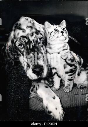 Feb. 25, 2012 - A dog's life. Everytime the 3 yr old English Setter ''Bran'' prepares himself a place in the easy - Stock Photo