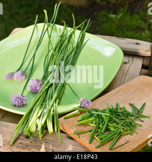 detail of chives on the green plate - Stock Photo