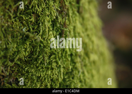 Green Moss Growing on Tree Trunk - Stock Photo