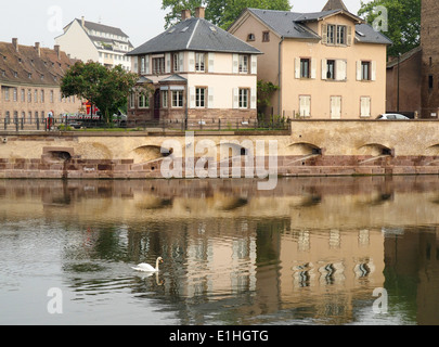 White Swan  Swimming on River in Strasbourg France - Stock Photo