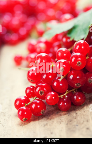 ripe red currant berries close up shot - Stock Photo