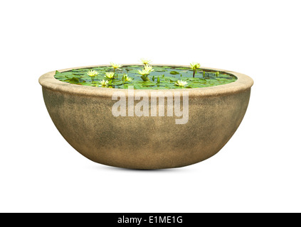 In a large pot with water lilies, lotus pink. - Stock Photo