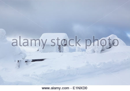 Heavy snow on trees and cottage - Stock Photo