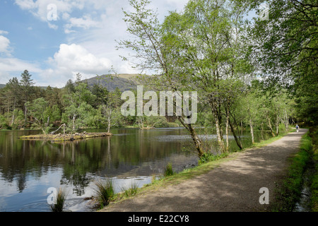 Lakeside footpath through Forestry Commission woodland around Glencoe Lochan in summer. Glencoe, Highland, Scotland, - Stock Photo