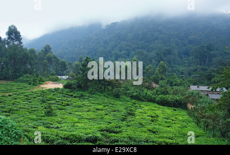 foggy scenery around the Bwindi Impenetrable Forest in Uganda (Africa) - Stock Photo