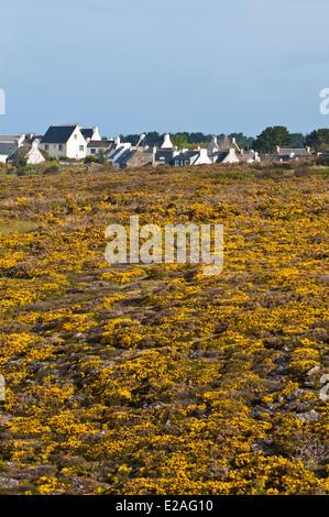 France, Morbihan, Ile de Groix, Quehello village on the south coast - Stock Photo