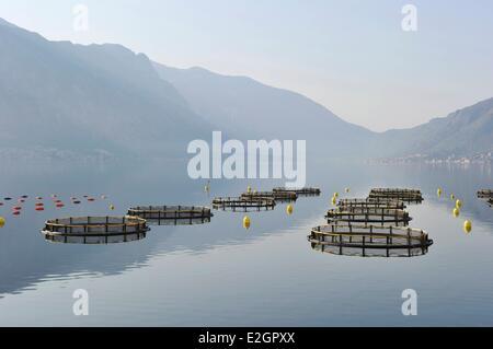 Montenegro Adriatic coast Kotor bay Aquacultur - Stock Photo
