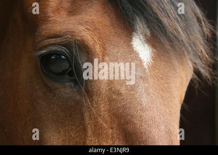Pferdeauge - Stock Photo