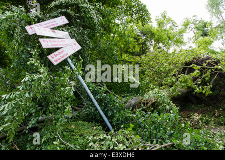 A fallen tree lay on a traffic sign in Herne, Ruhr area, Western Germany after the severe storm front Ela - Stock Photo