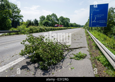 Fallen branches lay on the A43 motorway in Herne, Ruhr area, Western Germany, after the severe storm front Ela - Stock Photo