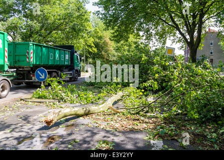 A fallen part of a tree lay on a street in Herne, Ruhr area, Western Germany, after the severe storm front Ela - Stock Photo