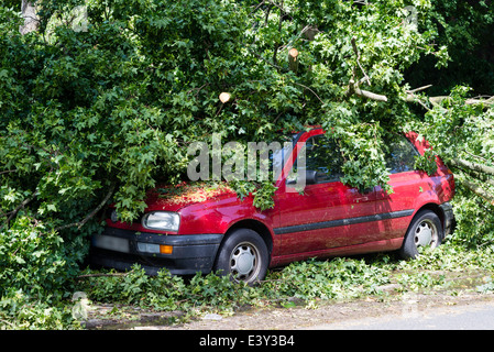 A fallen tree lay on a car in Herne, Ruhr area, Western Germany, after a severe thunderstorm in the evening of June, - Stock Photo