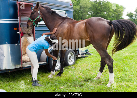 Rider grooming horse - Stock Photo