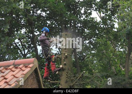 Sawing  down large garden tree. - Stock Photo