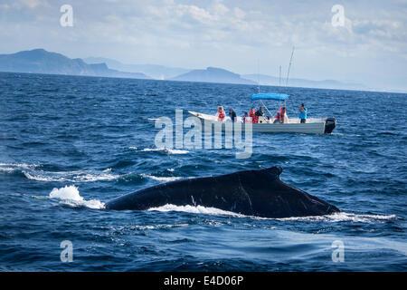 Tourists photograph a humpback whale near Mazatlan, Sinaloa, Mexico. - Stock Photo