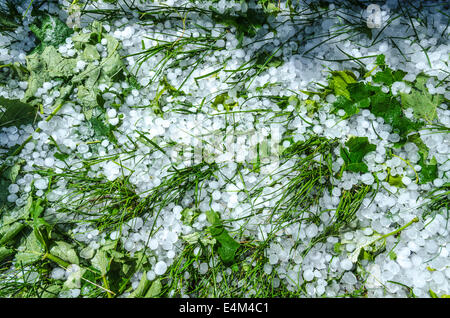 Hail ice balls in grass after a heavy rain - Stock Photo
