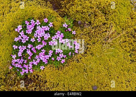 Iceland, scenic, Landschaft in Island - Stock Photo