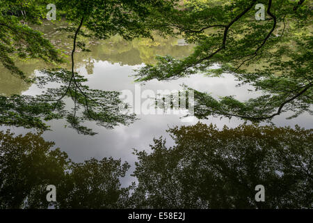 Kyoyochi Pond in the Gardens at Ryoanji Temple, Kyoto, Japan - Stock Photo