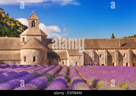 The Abbaye de Senanque in the Provence, France with blooming lavender - Stock Photo