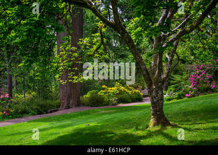 Hendrick's Park Rhododendron Gardens in Eugene, Oregon, USA. - Stock Photo