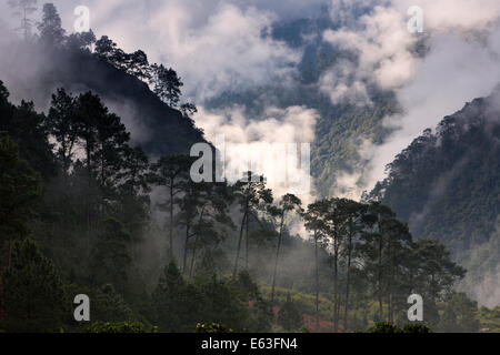 Eastern Bhutan, Lhuentse Valley Autsho, early morning low cloud in Kuri Chhu River valley forest - Stock Photo