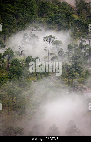 Eastern Bhutan, Lhuentse Valley, Autsho, early morning low cloud in Kuri Chhu River valley forest - Stock Photo