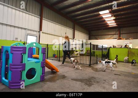 Dog daycare in Wellington New Zealand - Stock Photo