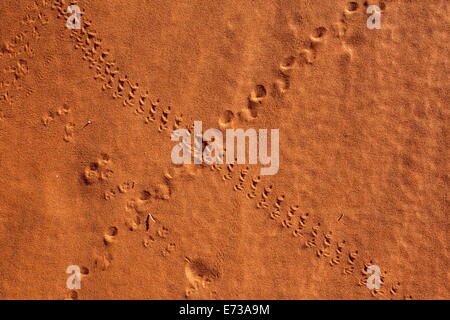 Small animal tracks in sand, Tok Tokkie trail, NamibRand nature reserve, Namibia, Africa - Stock Photo