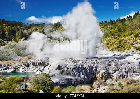 Pohutu Geyser, Whakarewarewa Thermal Valley, Rotorua, New Zealand - Stock Photo