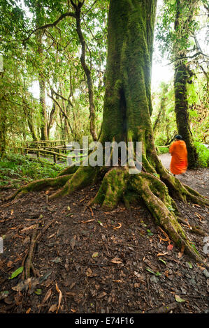 Buddhist monk in misty tropical rain forest. Sun beams shining through trees at jungle landscape. Travel background - Stock Photo