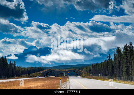 Dramatic clouds over Canadian Rockies, from Trans-Canada Highway, animal crossing bridge in dist, Banff National - Stock Photo