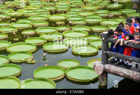 Taipei's Taiwan. 11th Sep, 2014. Children look at giant leaves of Victoria during an aquatic plants exhibition at - Stock Photo