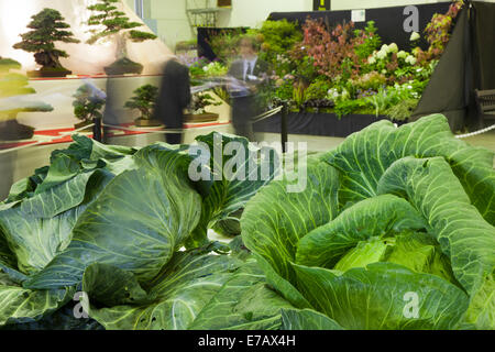 Harrogate, Yorkshire, UK. 11th Sept, 2014.  The Harrogate Annual Autumn Flower Show, Yorkshire Showground, ranked - Stock Photo