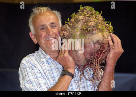 Harrogate, Yorkshire, UK. 11th Sept, 2014.  Ian Neale with Giant Vegetable, a beetroot weighing 28lbs 4ozs, at the - Stock Photo