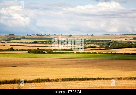 Summer chalk landscape of golden rolling arable fields view north west from near Aldbourne, Wiltshire, England - Stock Photo