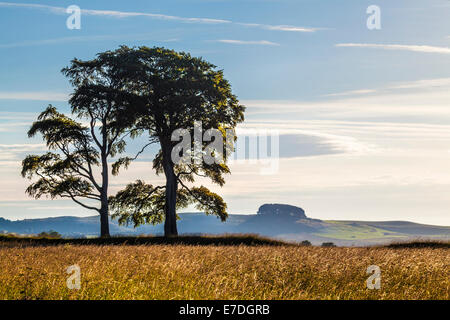 Early morning sunshine on Oliver's Castle, looking towards Morgan's Hill near Devizes, Wiltshire. - Stock Photo