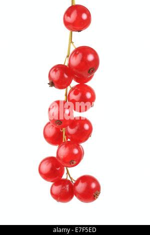 Red currants, Rovanda variety - Stock Photo