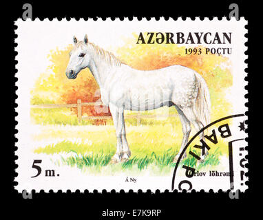 Postage stamp from Azerbaijan depicting an Orlov horse. - Stock Photo