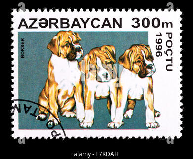 Postage stamp from Azerbaijan depicting boxer puppies. - Stock Photo